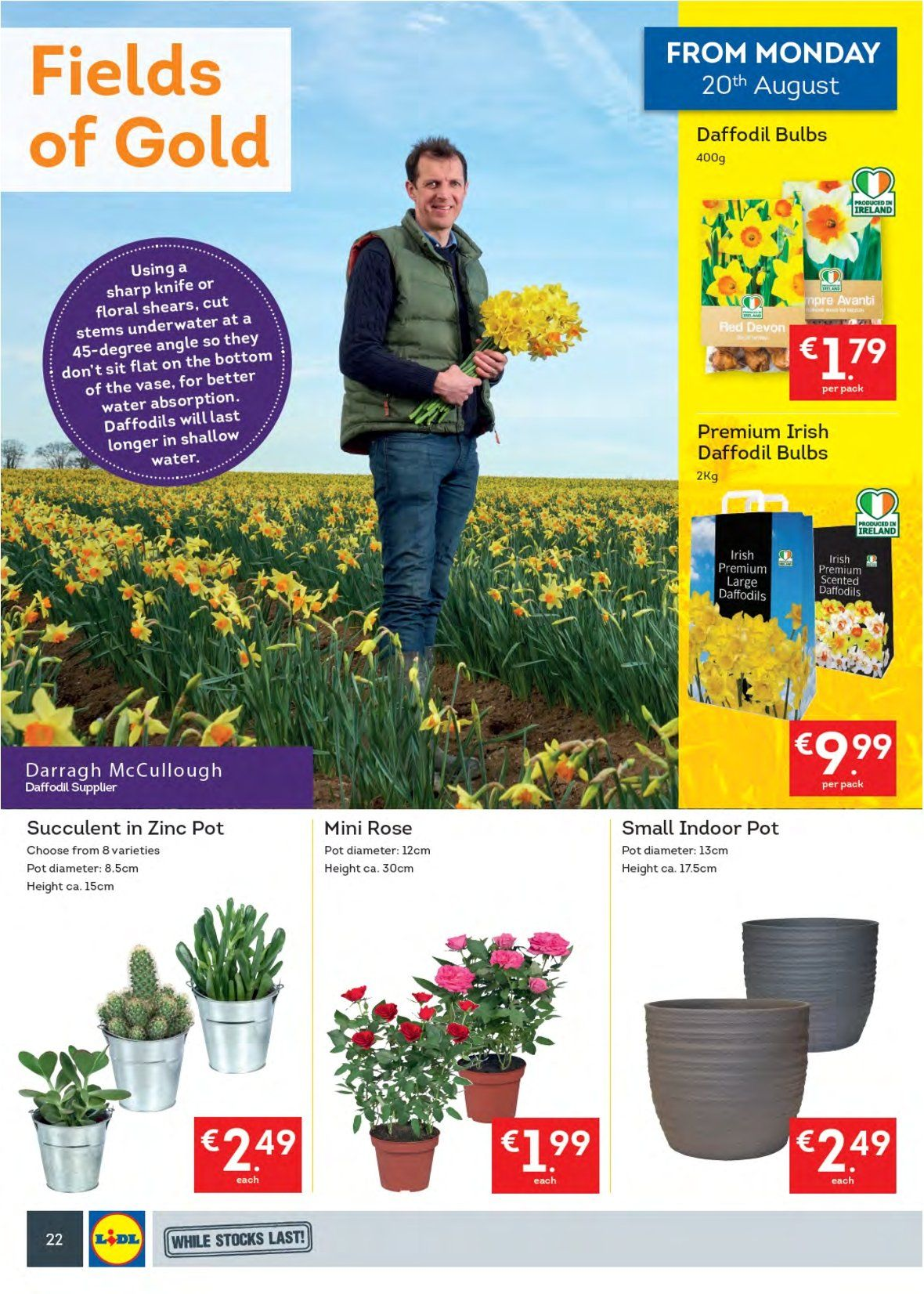 Lidl offer  - 20.8.2018 - 26.8.2018 - Sales products - knife, pot, Sharp, bulb, succulent, rose, daffodil, daffodils, zinc. Page 22.