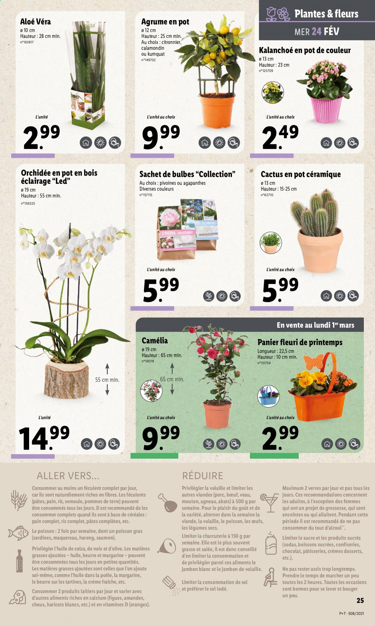 Catalogue Lidl - 24.02.2021 - 02.03.2021. Page 25.